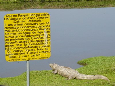 Jacare Barigui 1